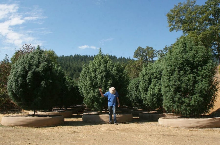 ID International: cannabis, marijuana websites